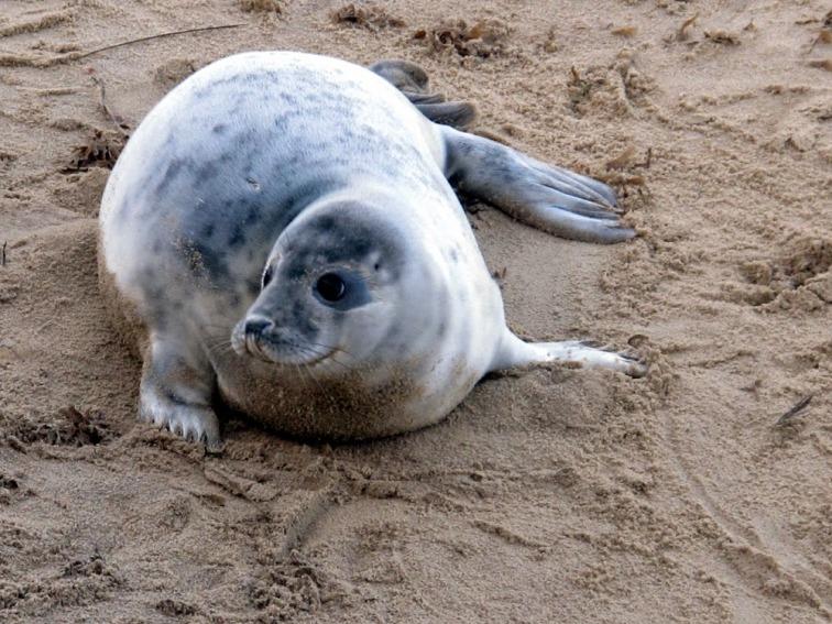 Seal pups in Norfolk - Winterton On Sea togetherintransit.nl