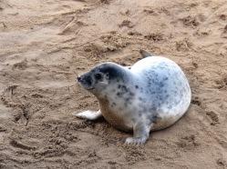 Smily Seal on Norfolk beach - Winterton On Sea togetherintransit.nl