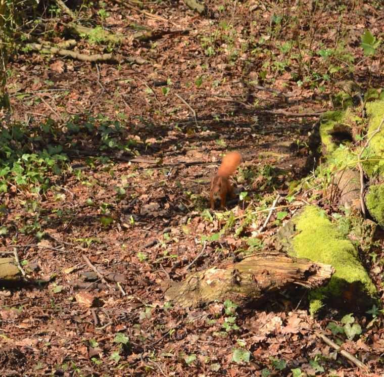 Red Squirrels Alverstone Isle of Wight togetherintransit.nl 9